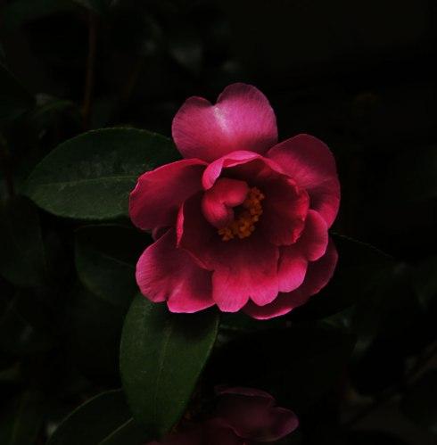 Flower-Photo-by-Claudia-Owen