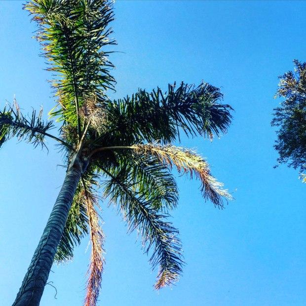 Kangaroo-Valley-Palm-Tree-by-Claudia-Owen