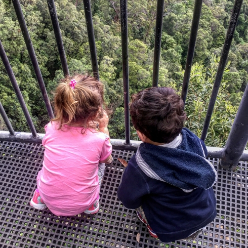 Fitzroy Falls Kiddies by Claudia Owen