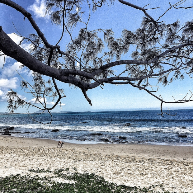 Mooloolaba Beach from under the Trees Photography by Claudia Owen