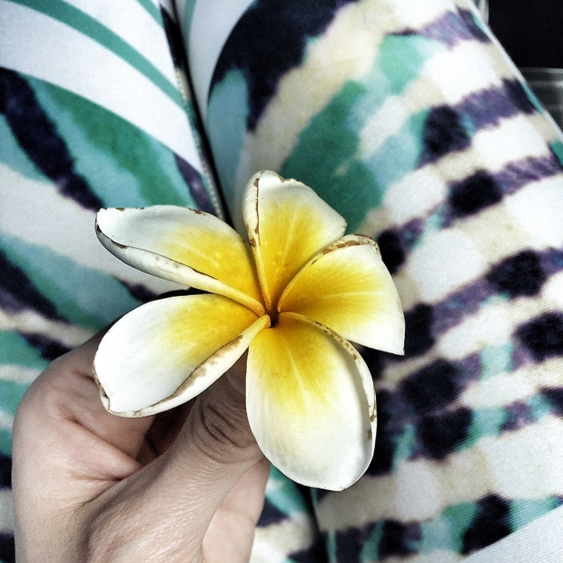 Mooloolaba Frangipani Photography by Claudia Owen
